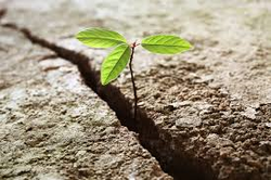 Owning your resilience: reducing trauma-influenced thinking
